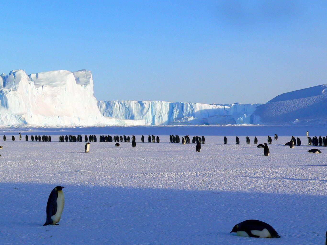 BeBiodiversity Biodiversity is | a balance Antarctique