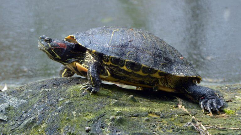BeBiodiversity Tortue