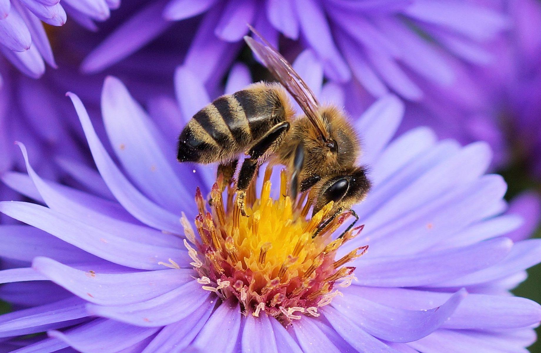 BeBiodiversity Quelles leçons tirer du rapport IPBES sur l'état de la biodiversité ?
