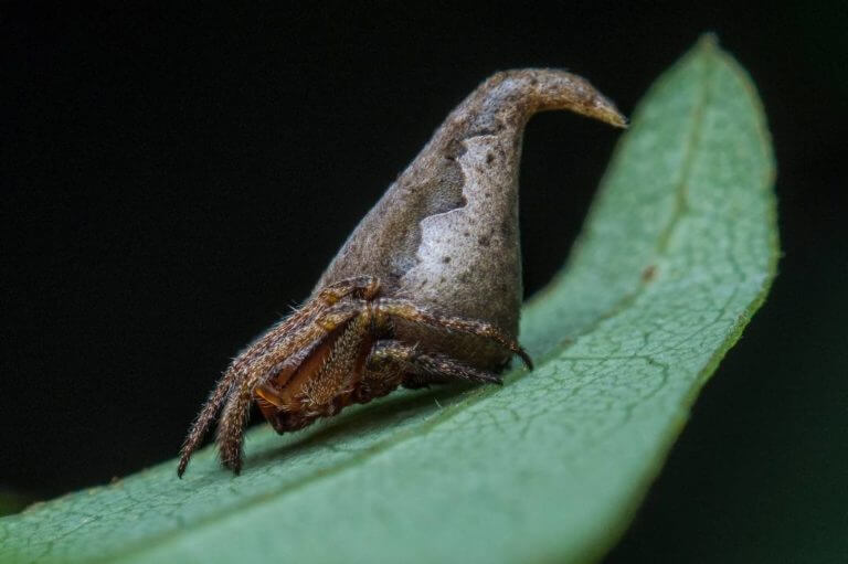 BeBiodiversity Credits