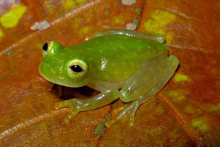 BeBiodiversity Crédits