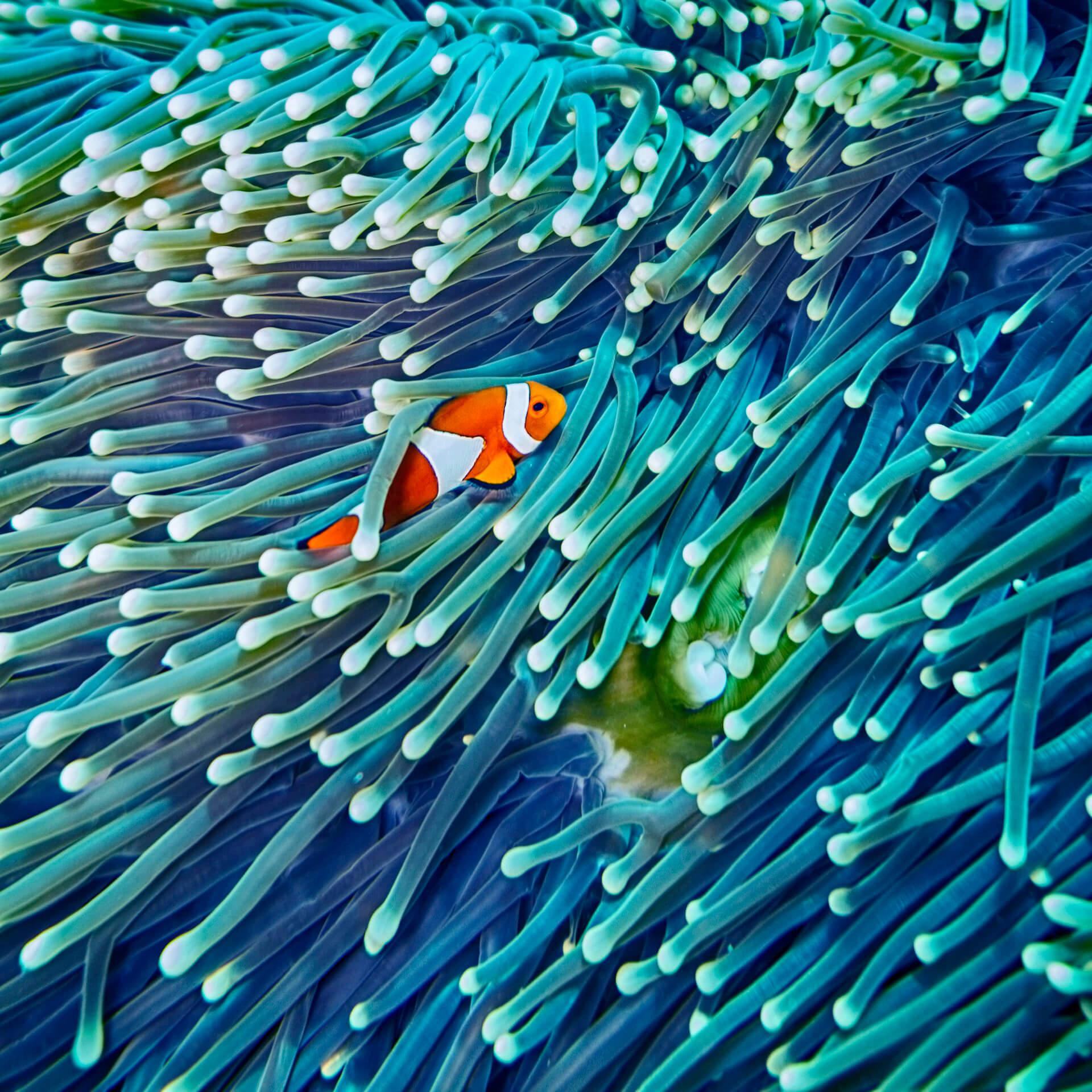 BeBiodiversity Biodiversity is | a balance