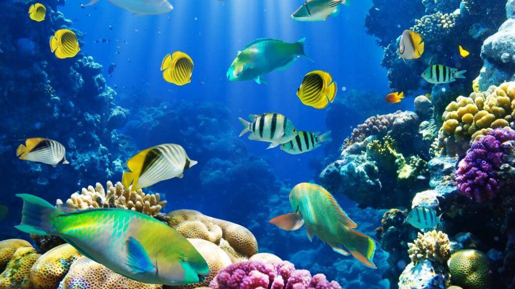 BeBiodiversity België engageert zich om de mariene biodiversiteit te beschermen!