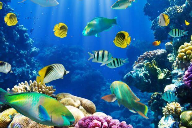 BeBiodiversity La Belgique s'engage à protéger la biodiversité marine !