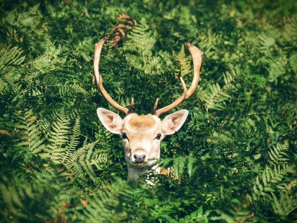 BeBiodiversity #BeBiodiversity fête l'environnement ce 5 juin