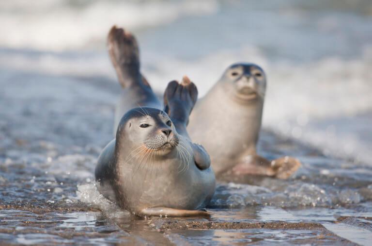 BeBiodiversity Onze Noordzee bruist van leven: ontdek het in onze brochure!