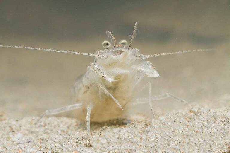 BeBiodiversity Notre mer du Nord est pleine de vie : découvrez-la !