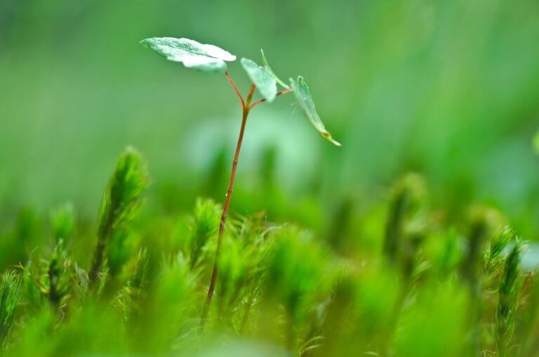 BeBiodiversity Lancez votre projet et aidez la nature !