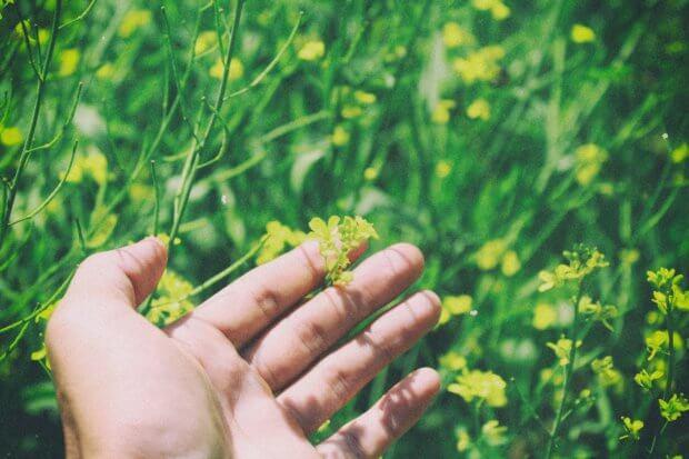 BeBiodiversity Start je project en help de natuur!