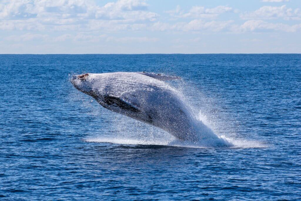 BeBiodiversity Noise pollution: a danger for cetaceans