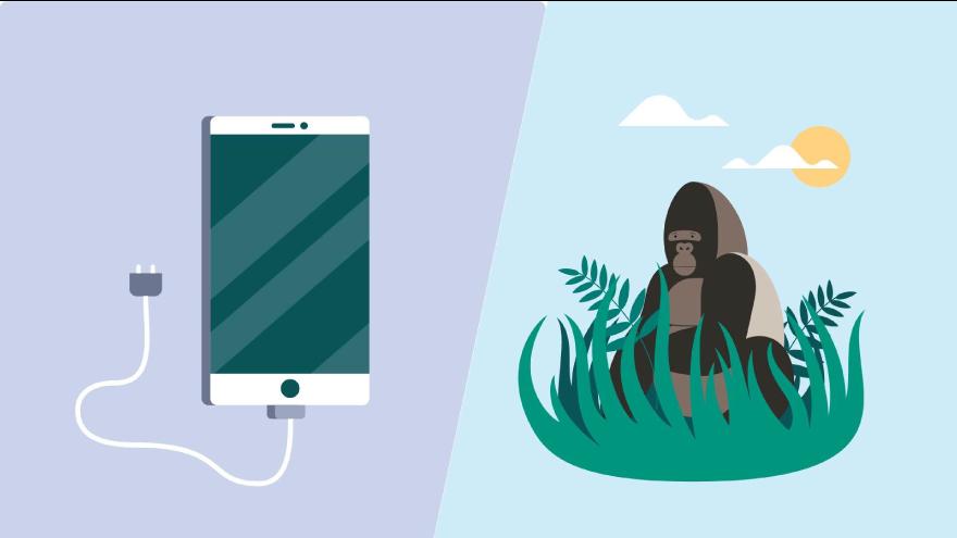 BeBiodiversity un smartphone et un gorille