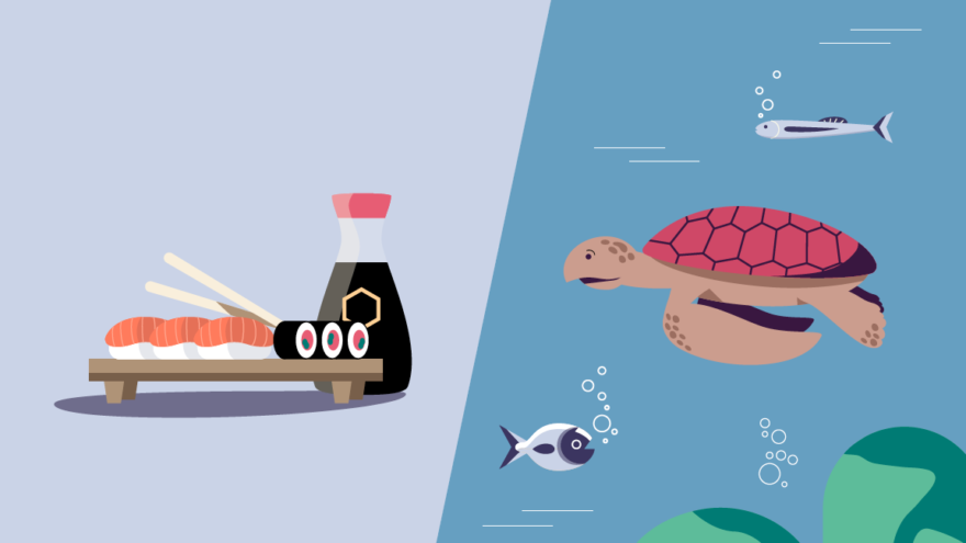 BeBiodiversity sushi and a turtle