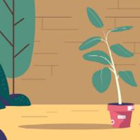 BeBiodiversity I garden and grow