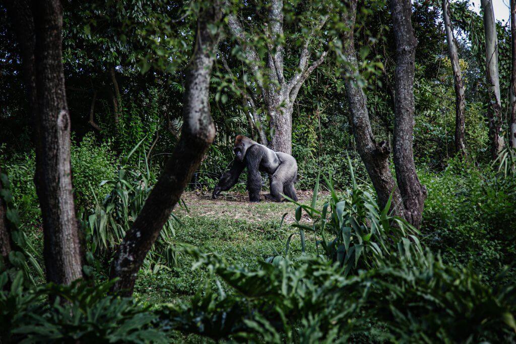 BeBiodiversity Quand nos activités détruisent des habitats entiers…