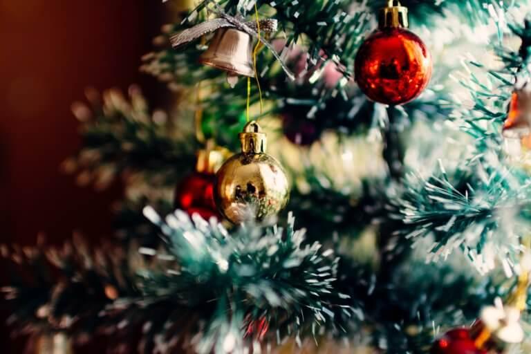 BeBiodiversity Un sapin de Noël… durable ?