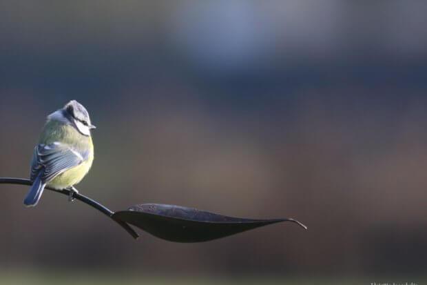 BeBiodiversity Mesurer la biodiversité en Belgique ?