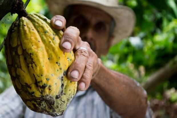 BeBiodiversity Geen cacao, geen chocolade…
