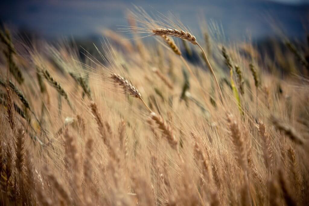BeBiodiversity Voedingslabels: goed voor de biodiversiteit?