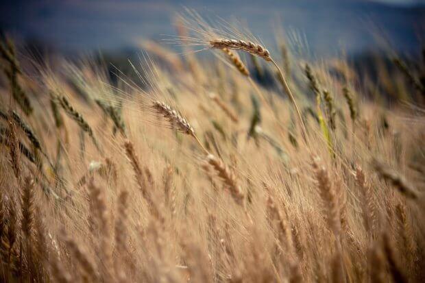 BeBiodiversity Les labels alimentaires : bons pour la biodiversité ?