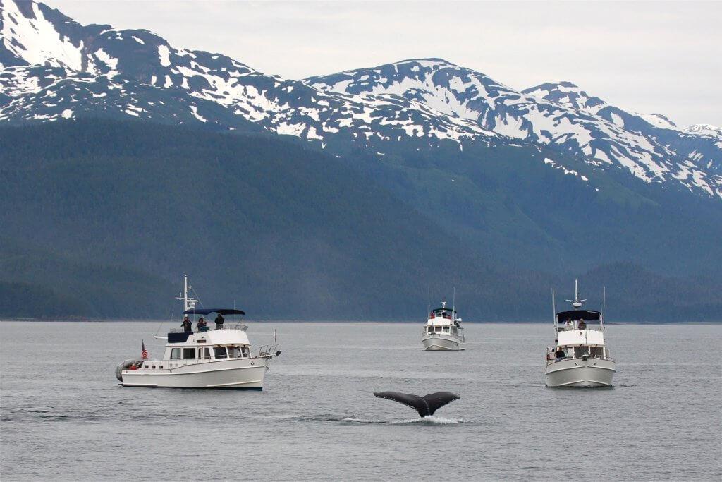 BeBiodiversity Le tourisme baleinier ? Oui, mais pas n'importe comment !