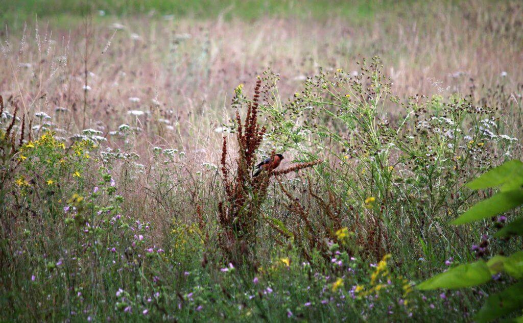 BeBiodiversity Voor een « biodiversity-friendly » tuin