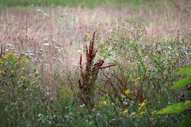 BeBiodiversity Pour un jardin « biodiversity-friendly »