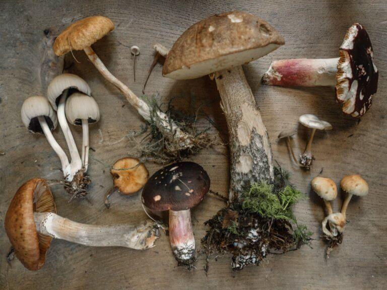 BeBiodiversity Paddenstoelen, neem je paraplu's, het is herfst!