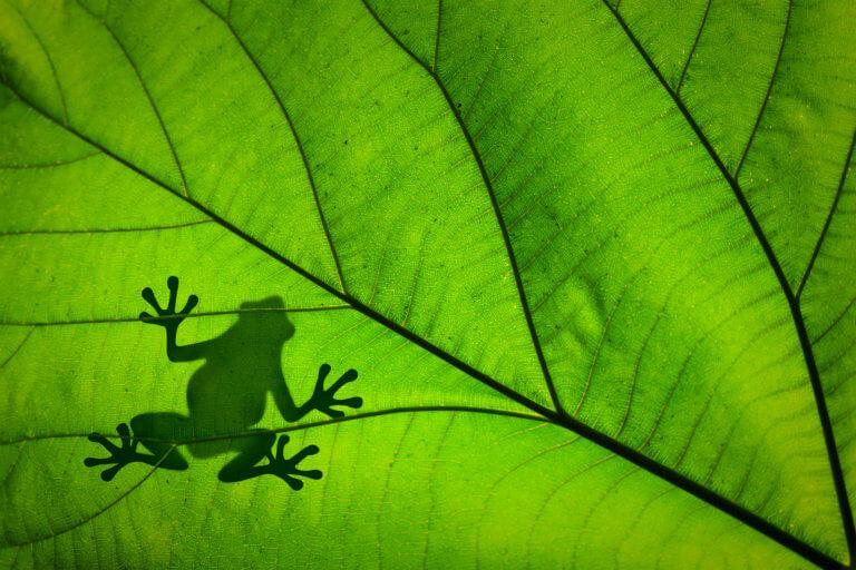 BeBiodiversity Wat leert ons het IPBES-rapport over de toestand van de biodiversiteit ?