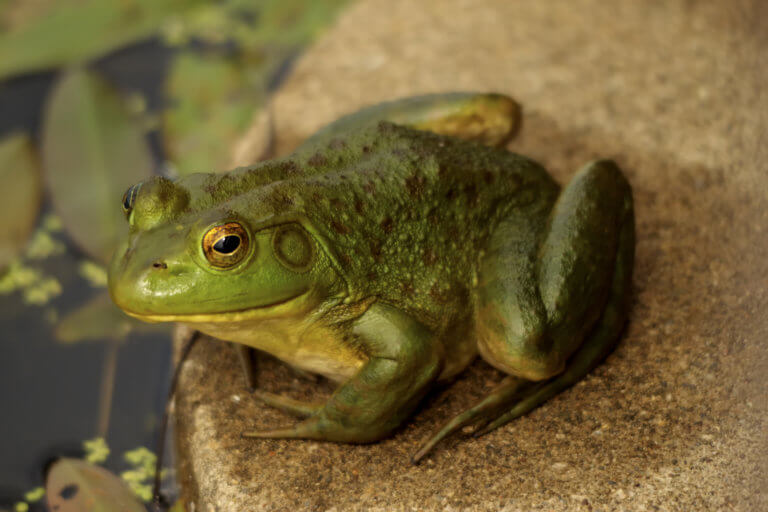 BeBiodiversity La lutte contre les espèces exotiques invasives s'organise