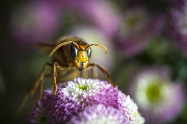 BeBiodiversity Une diversité envahissante ?