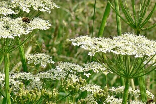 BeBiodiversity Halte aux espèces exotiques envahissantes