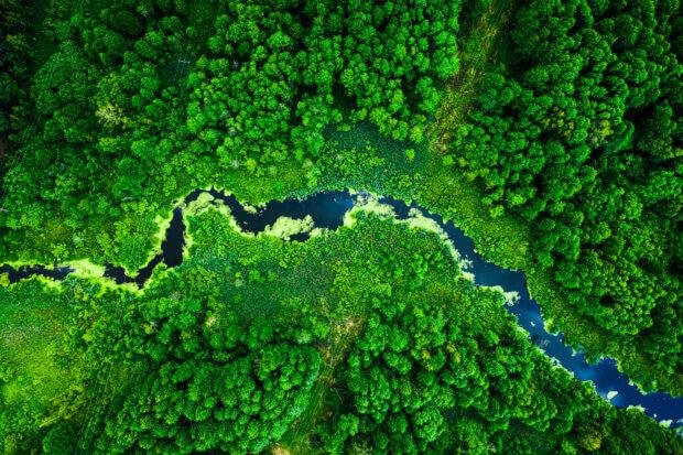 BeBiodiversity SOS Forêts en détresse