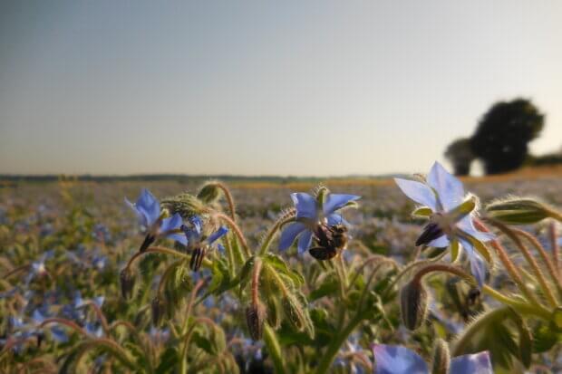 BeBiodiversity MakeSenz – Privilégier des matières premières locales