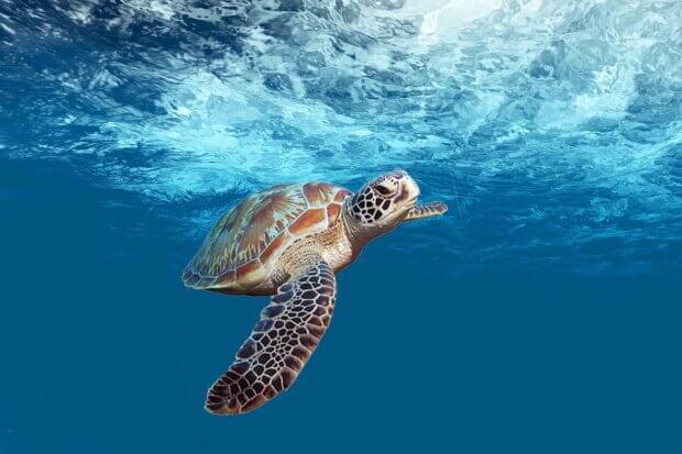 BeBiodiversity Détricoter le lien entre le trafic des tortues marines et la pollution plastique