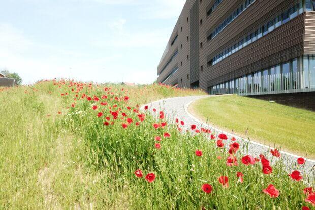 BeBiodiversity Créagora – Penser au terrain en amont de la construction d'un bâtiment