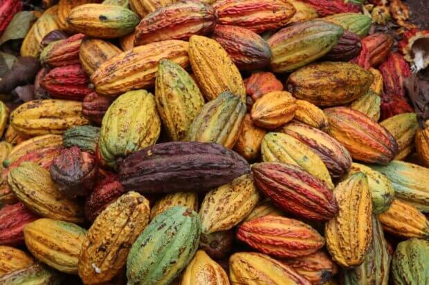 BeBiodiversity Belvas : du chocolat engagé !