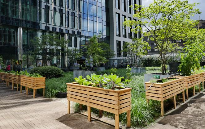 BeBiodiversity Régie des bâtiments : revégétaliser les espaces