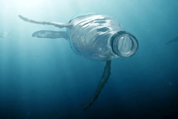 BeBiodiversity Déchets en mer : les animaux ne savent qu'en faire !