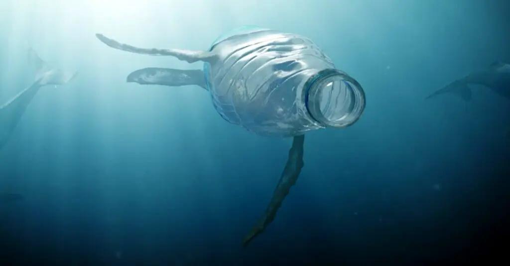 BeBiodiversity Afval in zee: wat moeten dieren ermee!
